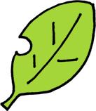 木の葉の無料イラスト素材 葉っぱ 黄緑